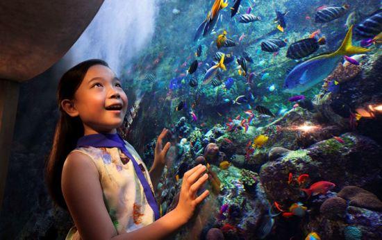 Atlantis Sanya Hotel-水族館
