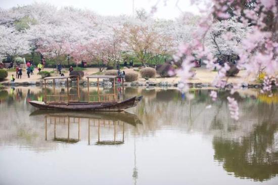 東湖櫻花園