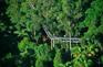 tamborine樹頂吊橋