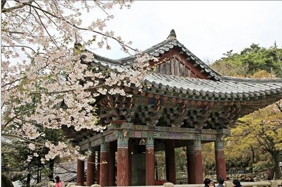 佛國寺(賞櫻花)