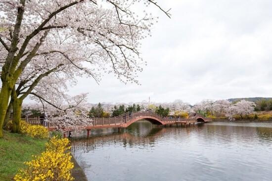 普門湖觀光園地(賞櫻花)