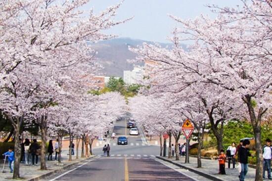 壽城遊園區(賞櫻花)