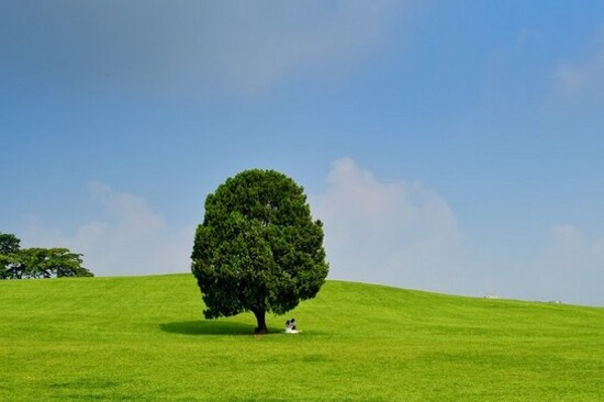 奧林匹克公園 ~ 孤獨樹