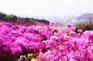 富川.遠美山