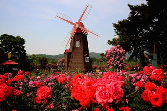 首爾大公園(賞玫瑰)