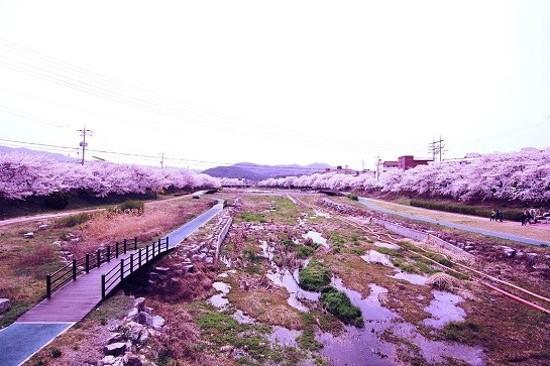 海美川(賞櫻花)