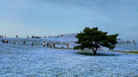HITACHI 海濱公園