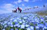 日立海濱公園