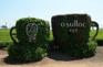 Osulloc 綠茶博物館