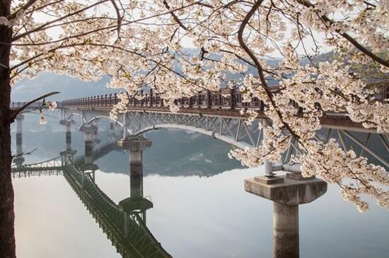 月映橋(賞櫻花)