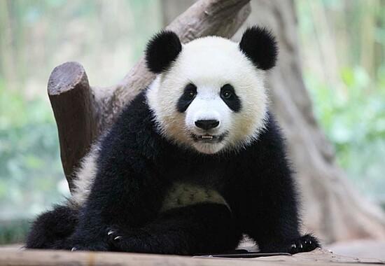 番禺長隆香江野生動物世界