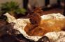 秘製窯雞風味宴