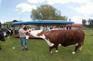 愛哥頓牧羊場3