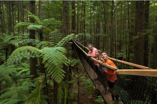 紅木樹林空中健步行4
