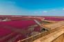 紅海灘國家風景廊道 - 廊橋愛夢
