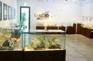 世界貝殼展示館