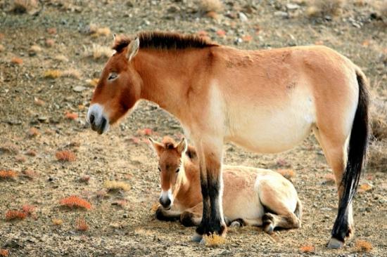 卡拉麥里野生動物保護區
