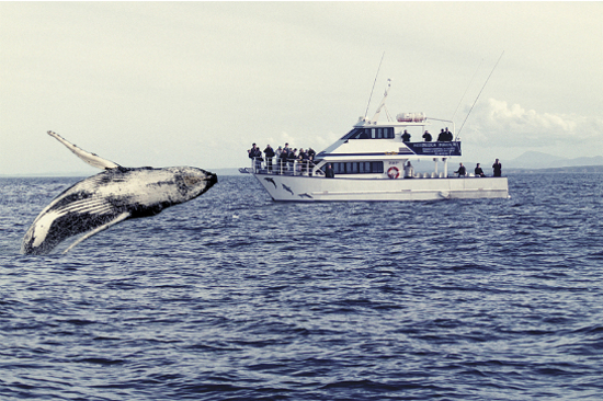 Whales watching _gold-coast