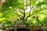 晨靜樹木園(賞繡花花)