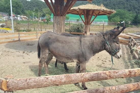 Ssangdongil動物農莊