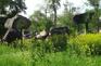 野馬古生態園-黑鐵隕石