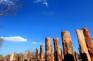 野馬古生態園-矽化木