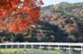 渡月橋紅葉