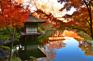 紅葉溪庭園紅葉