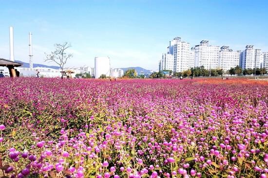 楊州‧Nari公園(賞千日紅)