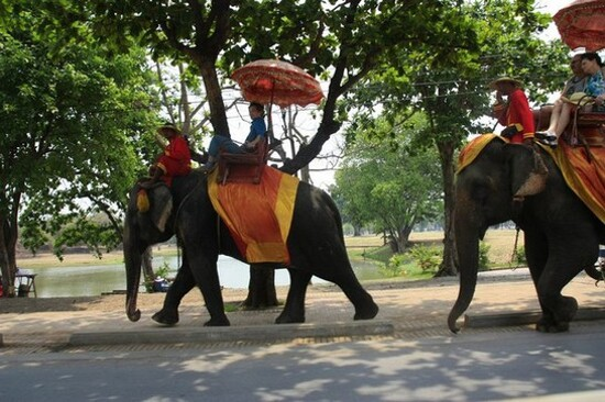 乘大象漫遊古城
