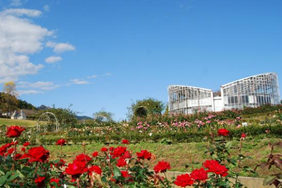茨城花之樂園Flower Park