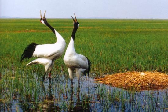 紮龍自然保護區