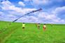 草原放風箏