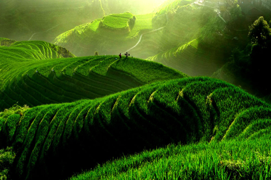 桂林龍脊梯田景區