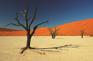 Dead desert big