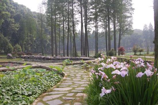 中科院植物園-水生植物園