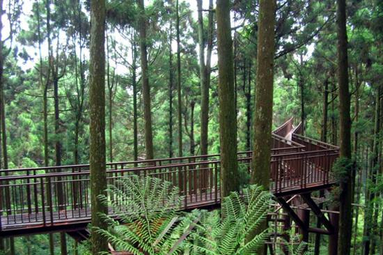 溪頭自然教育園區空中走廊