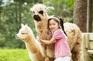 Alpaca World草泥馬公園