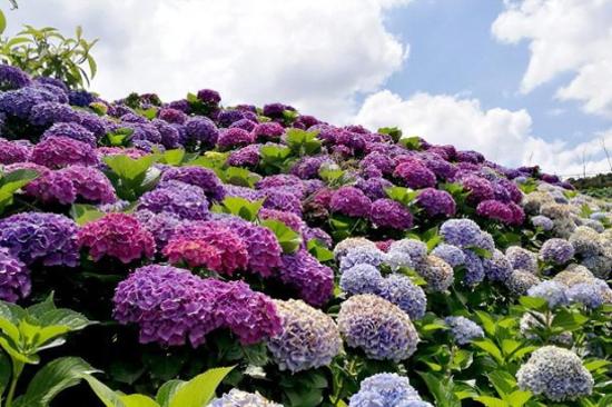 南國山花花卉莊園