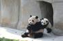 中國大熊貓保護研究中心~都江堰熊貓基地