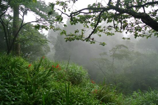 阿里山森林風景區