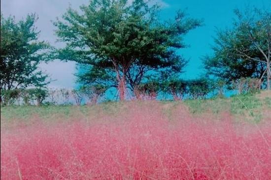 大渚生態公園(賞粉紅亂子草)