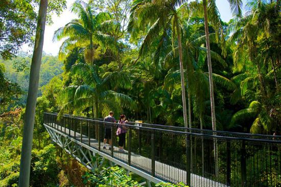 天寶倫山樹頂吊橋