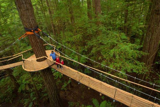紅木樹林空中健步行3