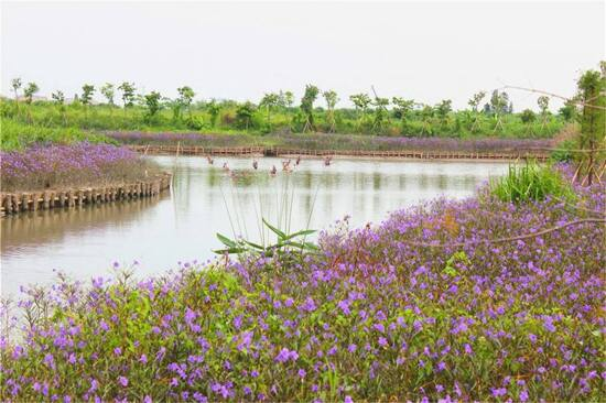 華陽湖濕地公園