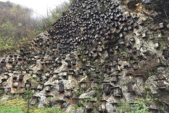 官門山~懸崖蜂巢