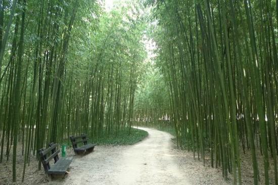 太和江大公園十里竹林