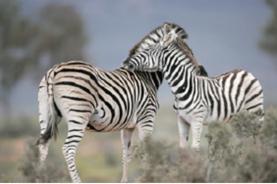 【稅項全包】南非皇牌之旅超五星級迷城皇宮、約翰尼斯堡、開普頓、比林斯堡野生動物保護區、鮑魚美食 8天皇牌觀光豪華團