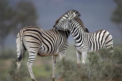 【稅項全包】南非皇牌之旅超五星級迷城皇宮、約翰尼斯堡賭城皇宮、 開普頓、比林斯堡野生動物保護區、鮑魚美食8天皇牌觀光豪華團