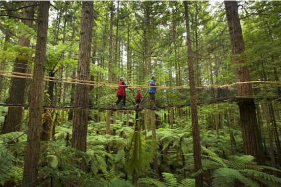 紅木樹林空中健步行